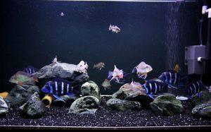 Tác dụng của than hoạt tính trong lọc bể cá, hồ cá